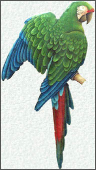 Painted metal parrot wall hanging. Decorative Military Macaw parrot design.