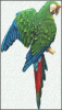 "Military Macaw Parrot Metal Wall Hanging. Tropical Decor - Steel Drum Art - 10"" x 24"""