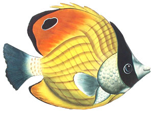"Yellow Striped Tropcial Fish Wall Hanging - 12"" x 17"""