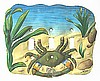 "Switchplate Cover - Painted Metal Blue Crab Light Switch Cover - Triple - 8"" x 7"""