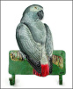 Painted Metal African Grey Wall Hook - Parrot Towel Hook - Tropical Design - 11""