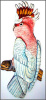 Major Mitchel Cockatoo Metal Wall Hanging - Hand Painted Metal Tropical Decor - 19""